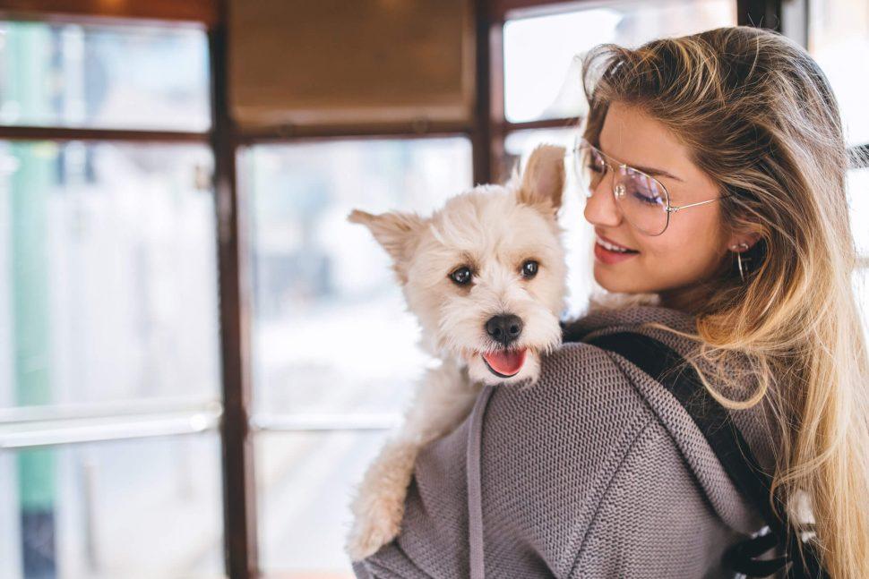 viajar de ônibus com cachorro