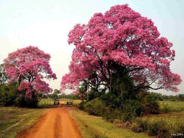 Outono no Pantanal