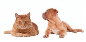 Saiba o que fazer para viajar sem se preocupar com transporte de animais