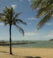 areia de praia e um coqueiro com a água da praia ao fundo